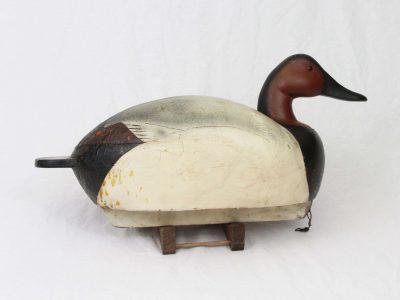 Koepsel Discher Canvasback