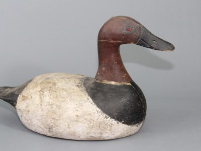 Nelow Canvasback