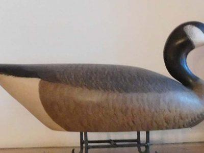 Valley Canada Goose
